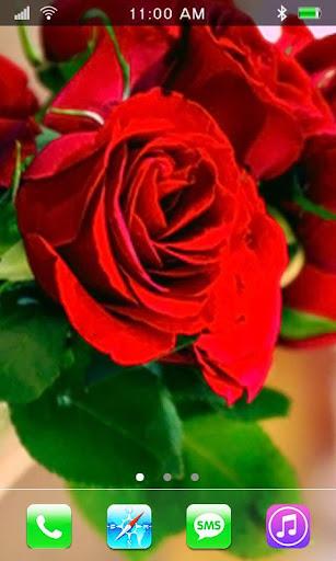 Romance March 8 HD LWP
