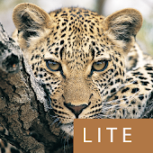 Mammals of SA Lite