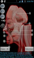 Screenshot of Anatomy Bones and Muscles