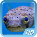 Beautiful Fish HD Wallpapers icon