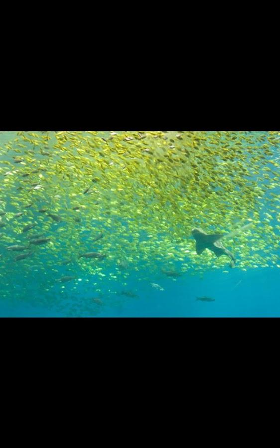 shark aquarium live wallpaper - photo #28