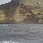 Chilean Dolphin, Tonina, Delfín Chileno