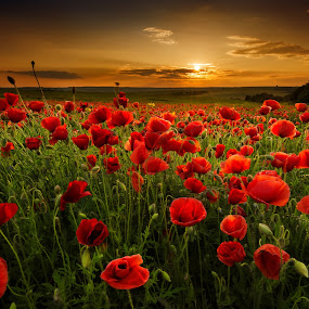 Poppy field by Evgeni Ivanov - Landscapes Prairies, Meadows & Fields ( sun coming through wildflowers, land, cloudscape, poppy, beauty, landscape, sunlight, spring, field, spring colorful flowers, sky, nature, wildflower, cloud, summer, light, flower,  )