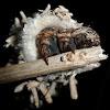 Bagworm moth (1)