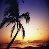 Seeing Maui