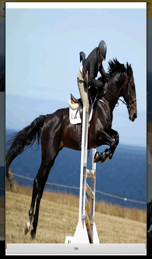 Equitation Games