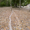 Leaf Cutter Ant Trails