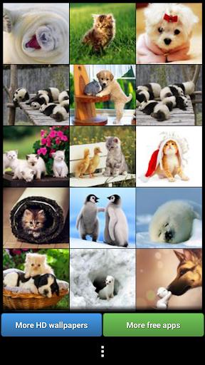 可愛的動物壁紙
