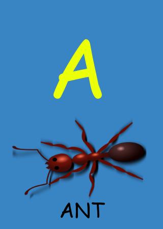 Animals Alphabets