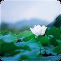 3D Lotus II (PRO)