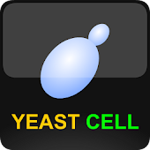 Virtual Yeast Cell