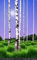 Screenshot of Birch Wood Live Wallpaper