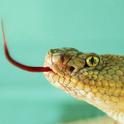 Snakes Wallpaper icon