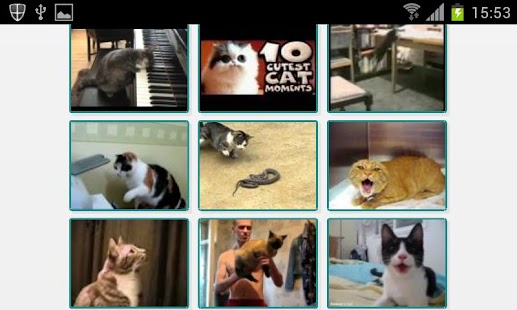 Videos de gatos - screenshot thumbnail