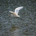 Great Egret or Common Egret