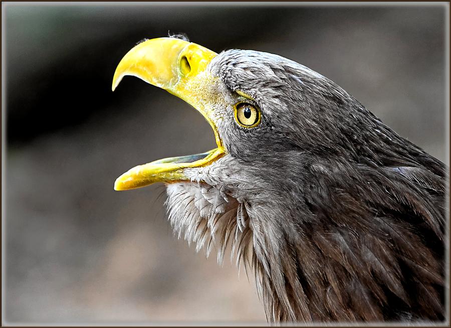 by Renos Hadjikyriacou - Animals Birds ( animals, birds,  )