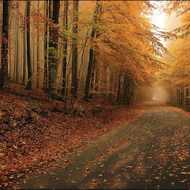 Scent of Autumn by Dragos Nedelcu - Landscapes Forests