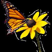 Butterfly on Flower Sticker