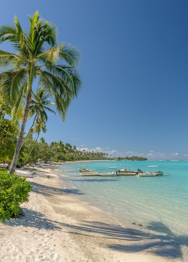 MMPI_20140522_MMCK0051_0138 by Mick McKean - Landscapes Travel ( holiday, palm tree, structure, lagoon, pontoon, family, plants, beach, boat, vessels, palms,  )