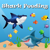 Shark Feeding 2