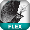 Enterprise with Flex logo