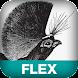 Enterprise with Flex