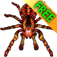 iSpider Free icon