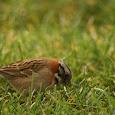 Pájaros de la Zona Central de Chile