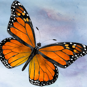Monarch Butterfly by Charlie Alolkoy - Illustration Flowers & Nature ( monarch butterfly, butterfly, sky, fly, monarch, bug, insect )
