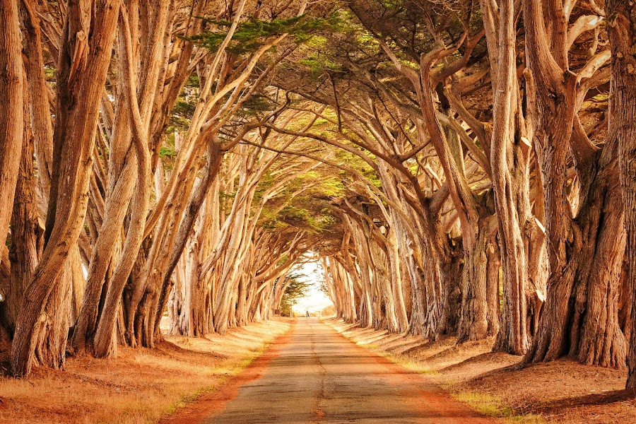 Through the Trees by Lou Plummer - Landscapes Travel ( california,  )