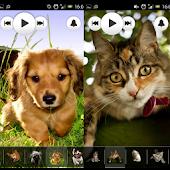 Cat & Dog Sounds