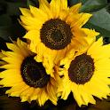 Sunflower Wallpapers logo