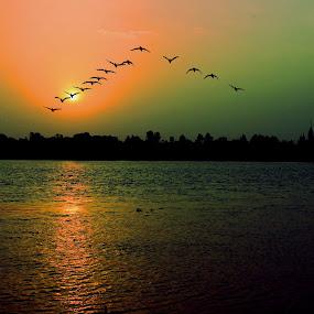 Rise up by Santanu Dutta - Landscapes Sunsets & Sunrises (  )