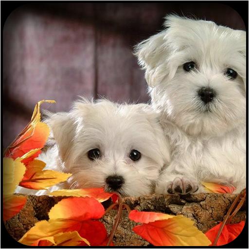 个人化の白犬の壁紙 LOGO-記事Game