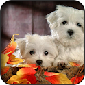 White Dogs Wallpapers icon
