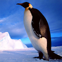 Penguins Jigsaw Puzzles icon