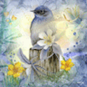 Blue Bird Doves Live Wallpaper