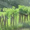 Gumbo limbo fence