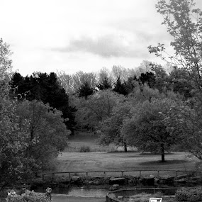 by Shannon Sellars - Black & White Landscapes ( , black and white, b&w, landscape )