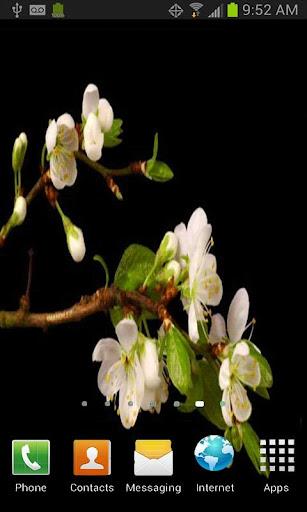 Blooming Flowers LWP