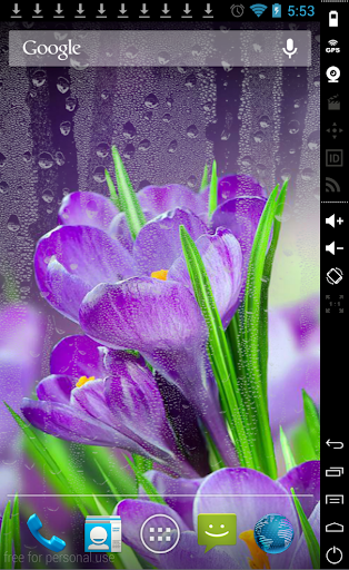 Daisy in Rain Live Wallpaper