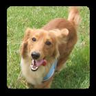 Dog's Age icon