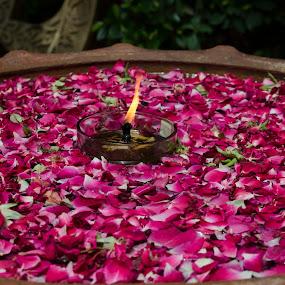 Lights by Palak Patel - Flowers Flower Arangements