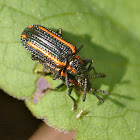 Leaf miners (mating)