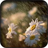 Amazing Rain Wallpapers