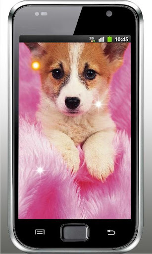 Pet Puppy HD Live Wallpaper