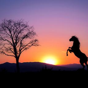 Snovi o Bukovici by Srbx  Cicapo - Animals Horses ( dalmacija, ervenik, biovicino selo, bukovica, kistanje )