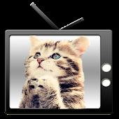 American CAT TV