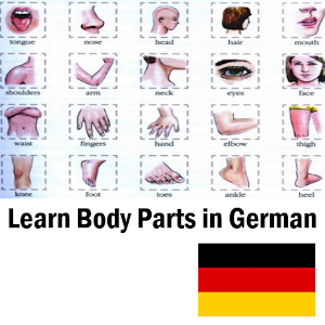 body parts in german pdf