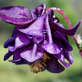 by OL JA - Flowers Single Flower (  )